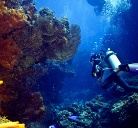 scuba dving cozumel diving trips for the best diving in cozumel mexico