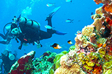 dive in cozumel with the best scuba diving cozumel diving trips