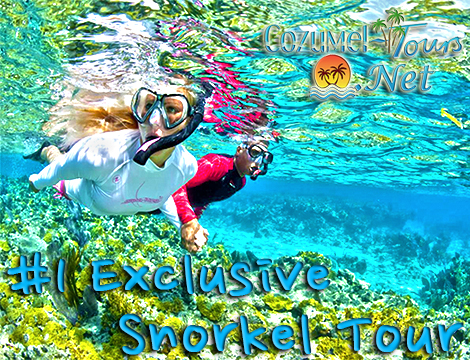 snorkel in cozumel with the best cozumel snorkel tour in cozumel mexico