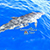 Snorkel Cozumel with our best Cozumel snorkel guides, Dolphin Swim