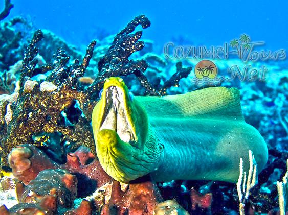 Cozumel Atv And Snorkel Tour Cozumel Atv Jungle