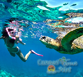 best cozumel snorkel tour for a cozumel snorkeling excursion in cozumel mexico